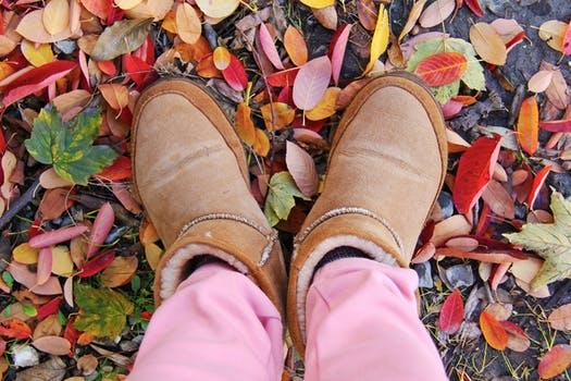 autumn-colorful-leaves-beautiful-160771
